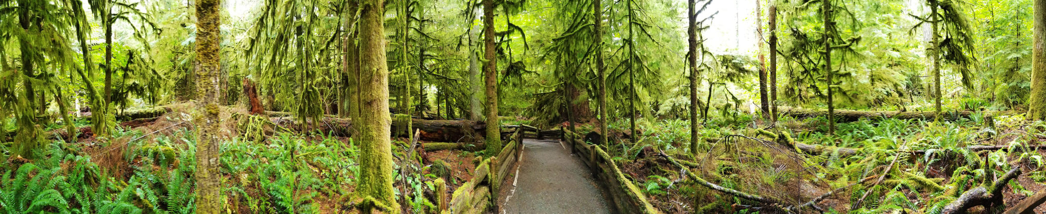 Cathedral Grove Panorama