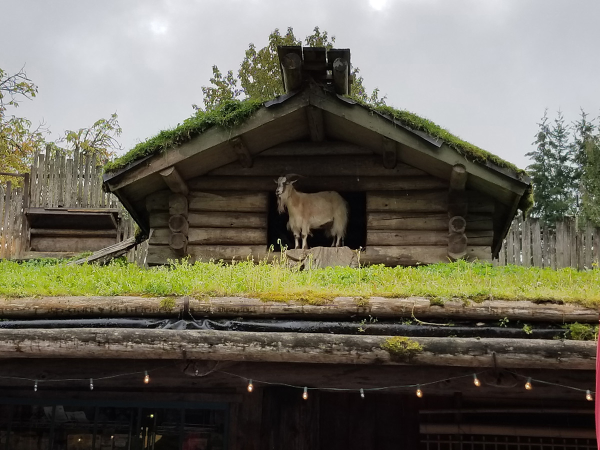 Goats on the Roof, Coombs, BC